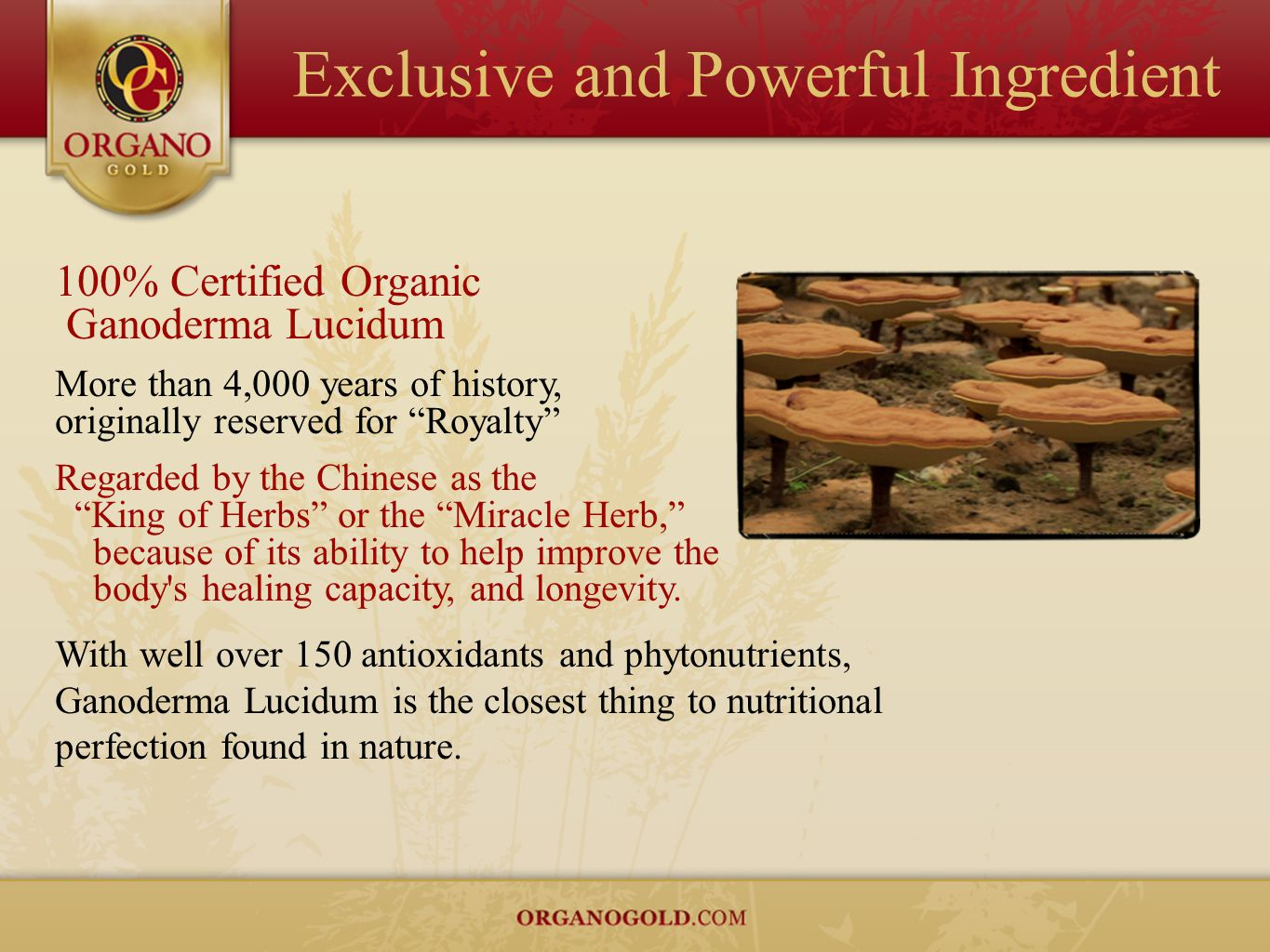 Exclusive and Powerful Ingredient