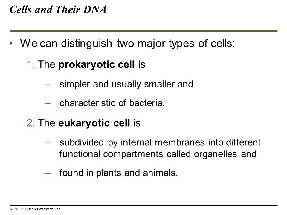 We can distinguish two major types of cells: