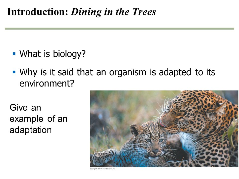 Introduction: Dining in the Trees
