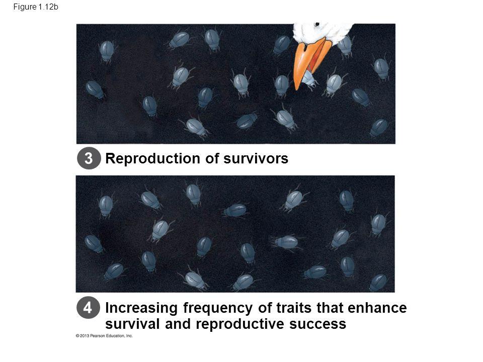 3 4 48 Reproduction of survivors