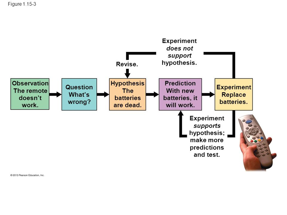 67 Experiment does not support hypothesis. Revise. Observation
