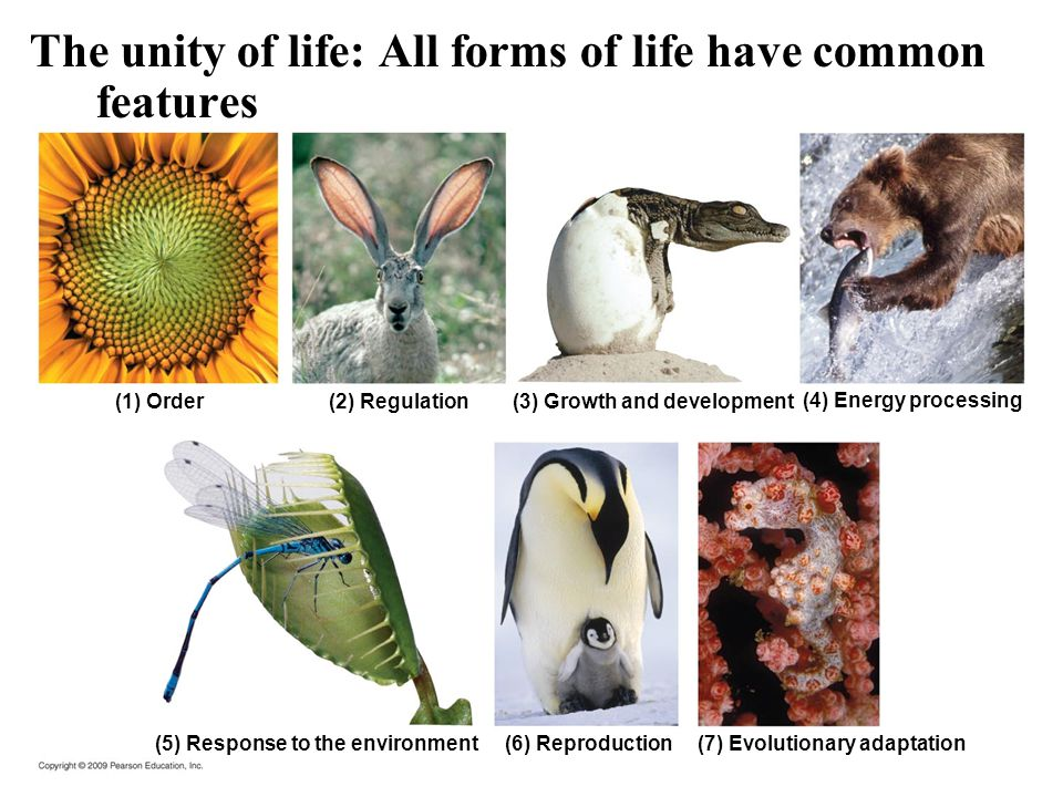 The unity of life: All forms of life have common features