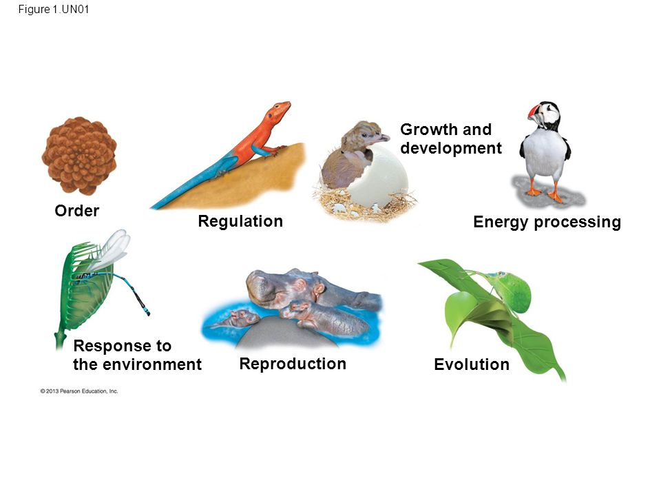 89 Growth and development Order Regulation Energy processing