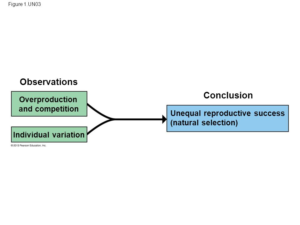 91 Observations Conclusion Overproduction and competition