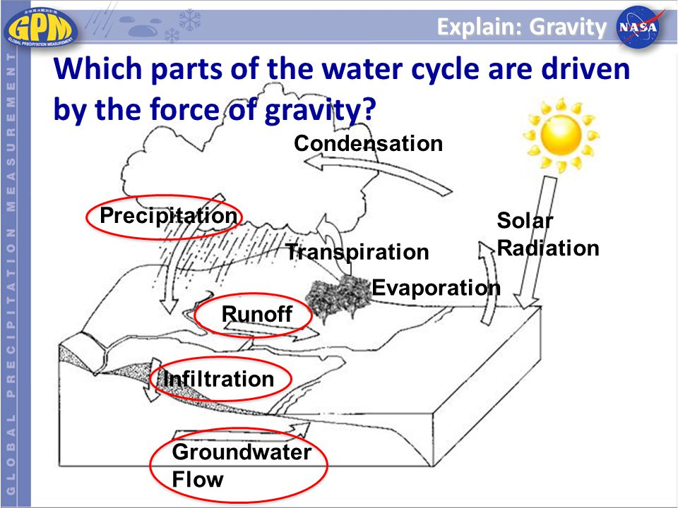 Which parts of the water cycle are driven by the force of gravity