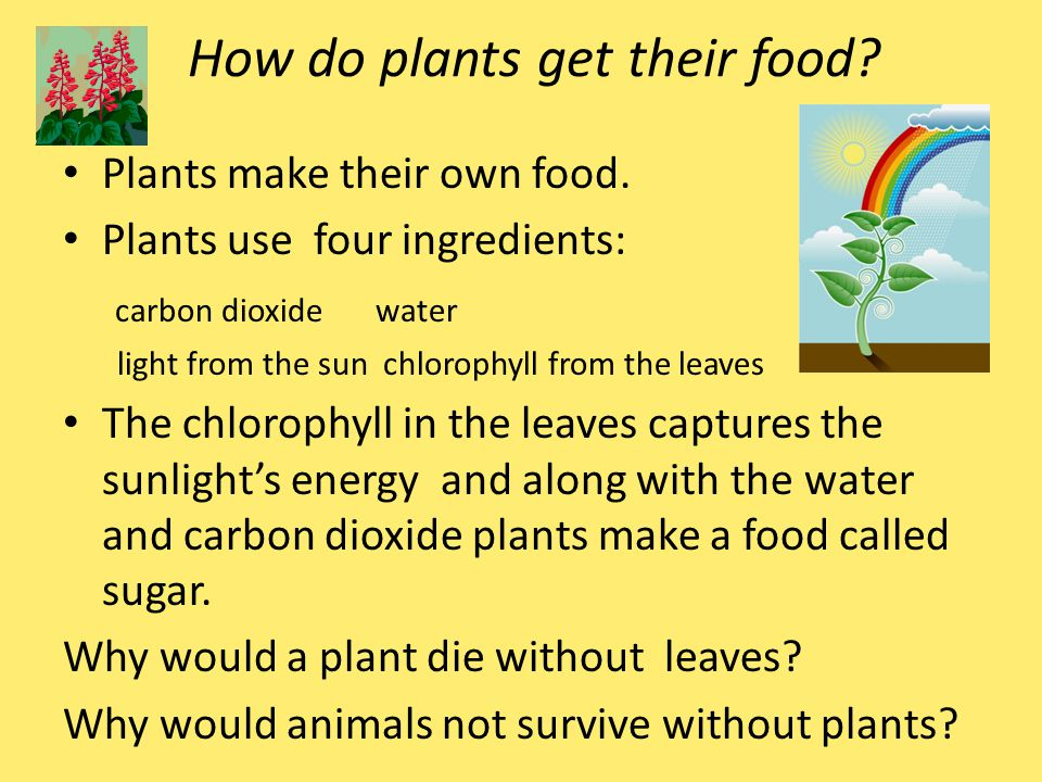 how plants make your own food Q & a: plants getting food under water learn more physics don't have it so easy, they have to make their own food plants use water (h 2 o), carbon dioxide.