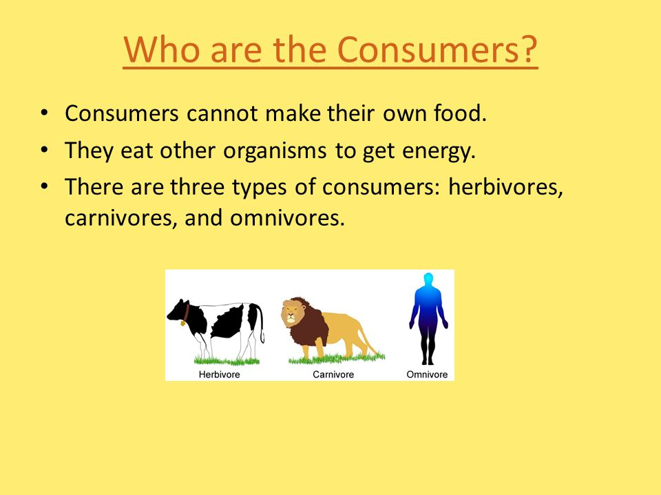 Who are the Consumers Consumers cannot make their own food.