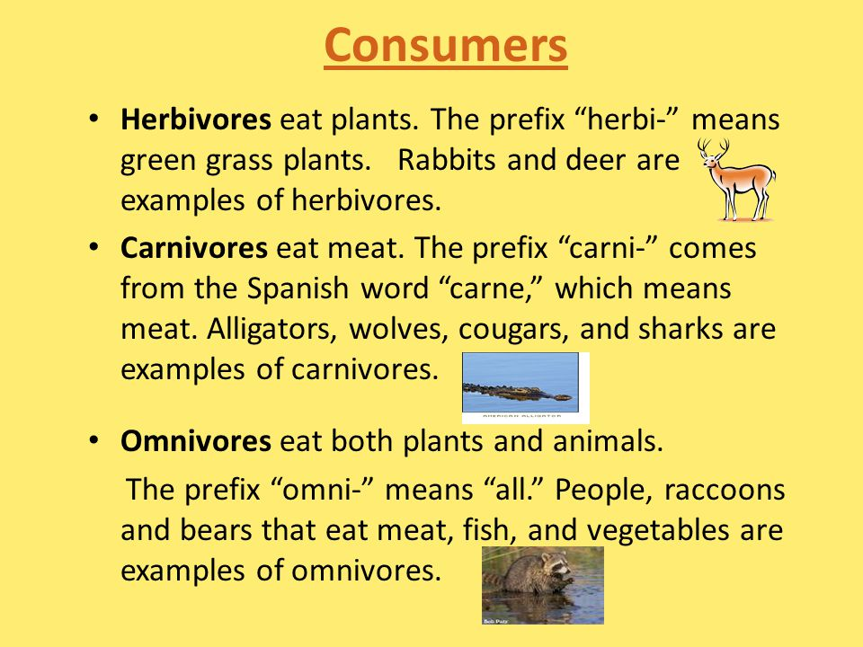 Consumers Herbivores eat plants. The prefix herbi- means green grass plants. Rabbits and deer are examples of herbivores.