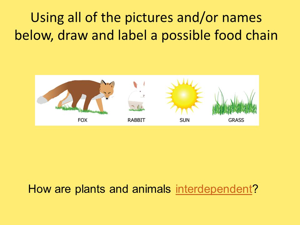 Using all of the pictures and/or names below, draw and label a possible food chain