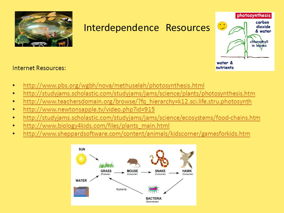 Interdependence Resources