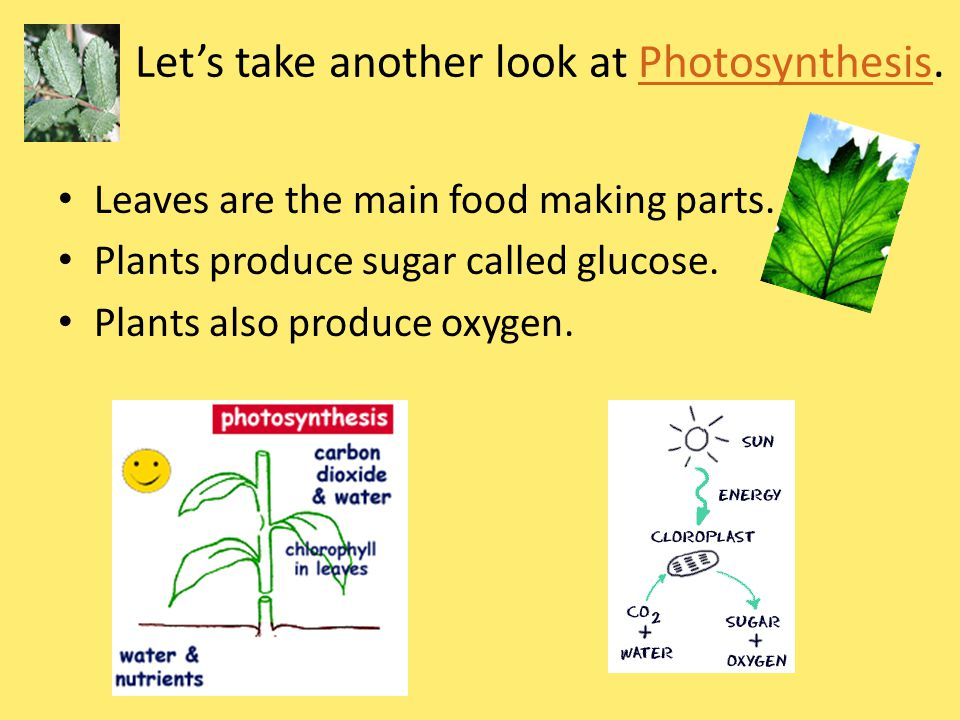 Let's take another look at Photosynthesis.