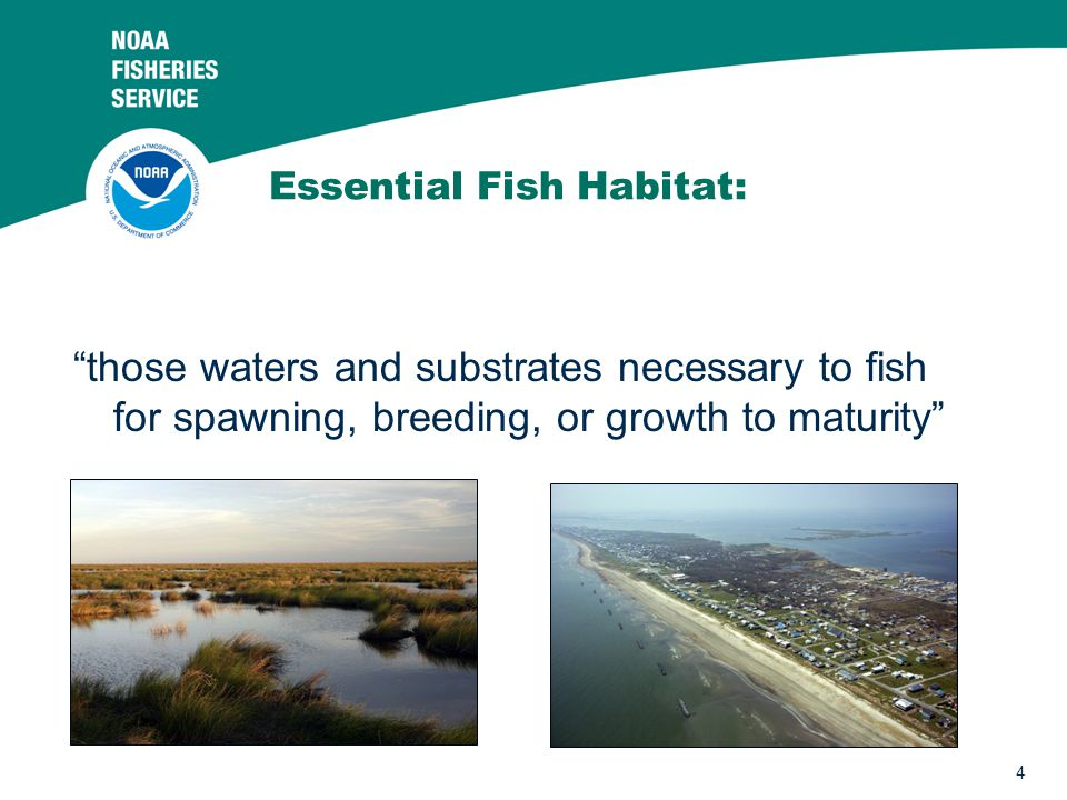 Essential Fish Habitat: