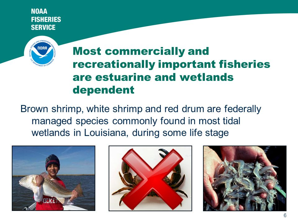 Most commercially and recreationally important fisheries are estuarine and wetlands dependent