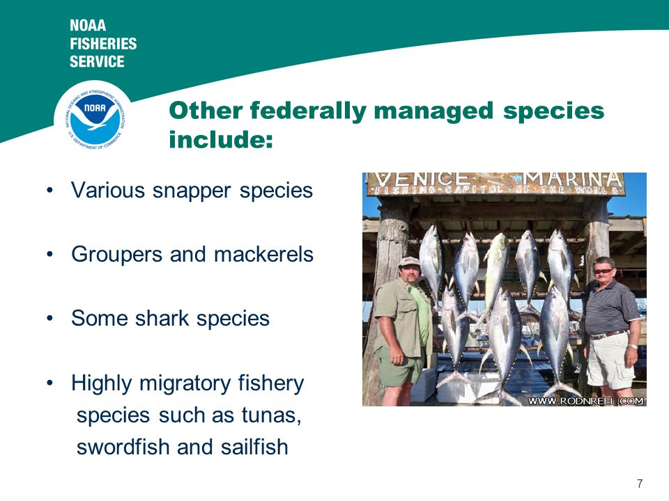 Other federally managed species include: