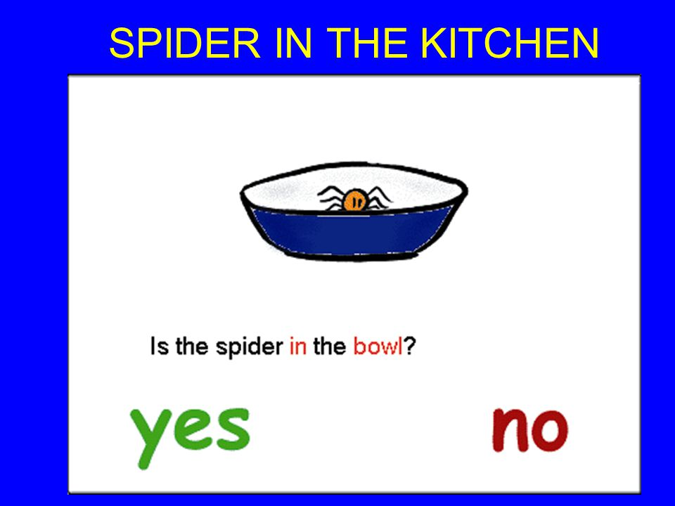 SPIDER IN THE KITCHEN SPIDER IN THE KITCHEN(Inclusive Technology)