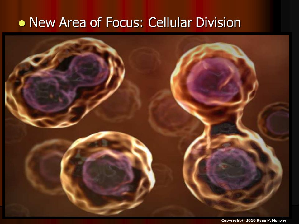 New Area of Focus: Cellular Division