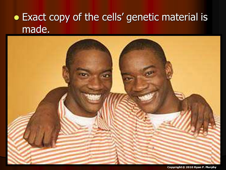 Exact copy of the cells' genetic material is made.