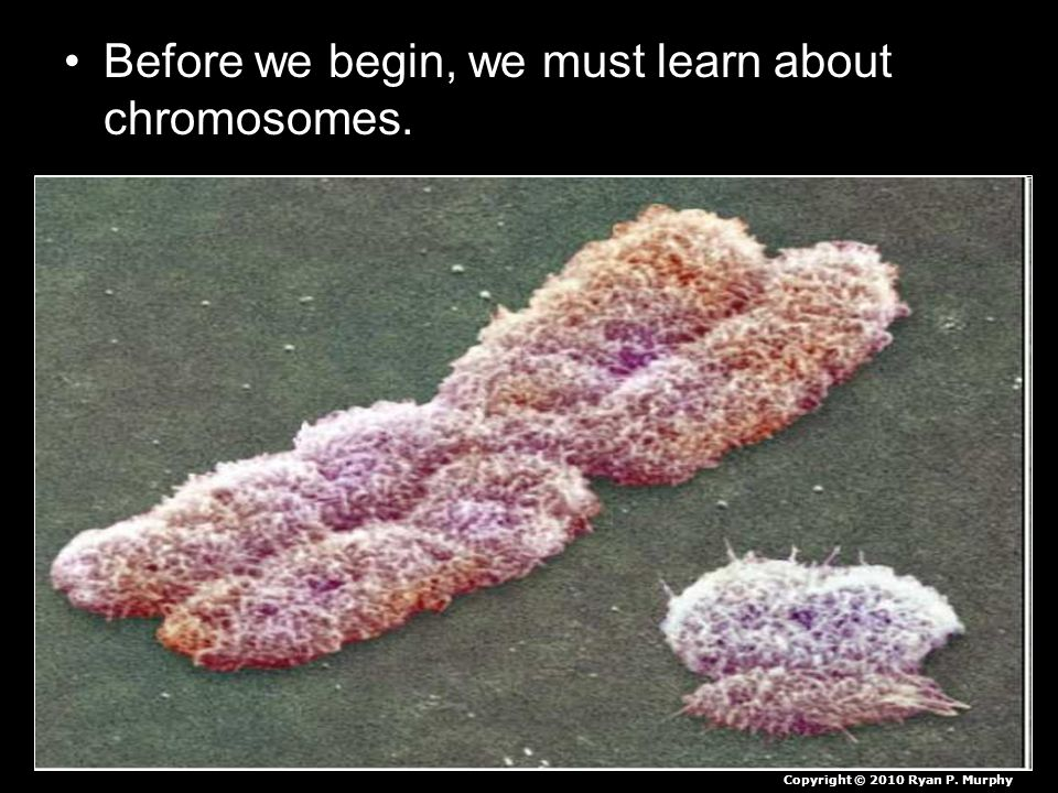 Before we begin, we must learn about chromosomes.