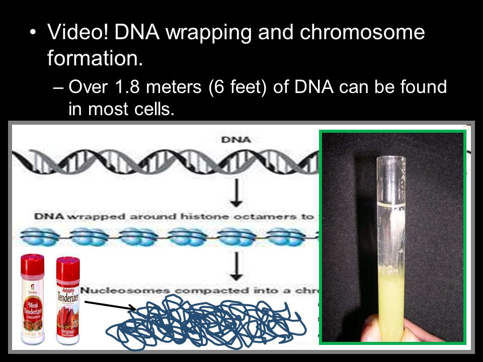 Video! DNA wrapping and chromosome formation.