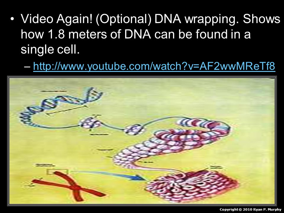 Video Again. (Optional) DNA wrapping. Shows how 1