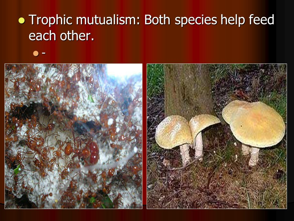 Trophic mutualism: Both species help feed each other.