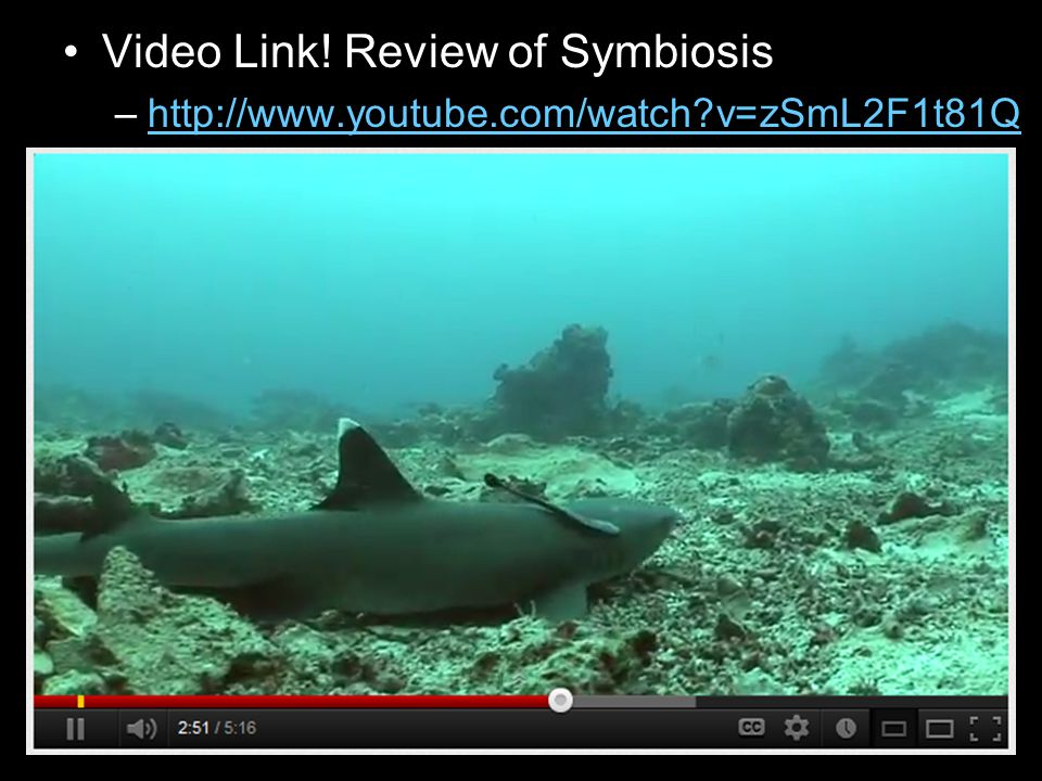 Video Link! Review of Symbiosis