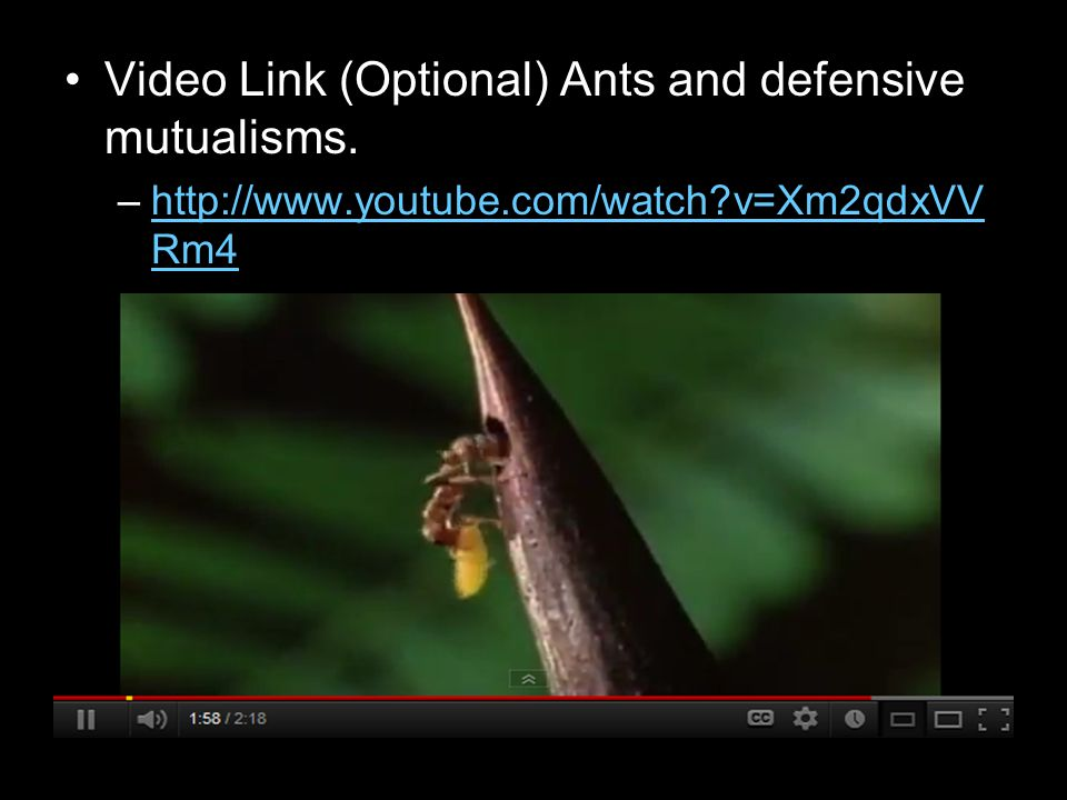 Video Link (Optional) Ants and defensive mutualisms.