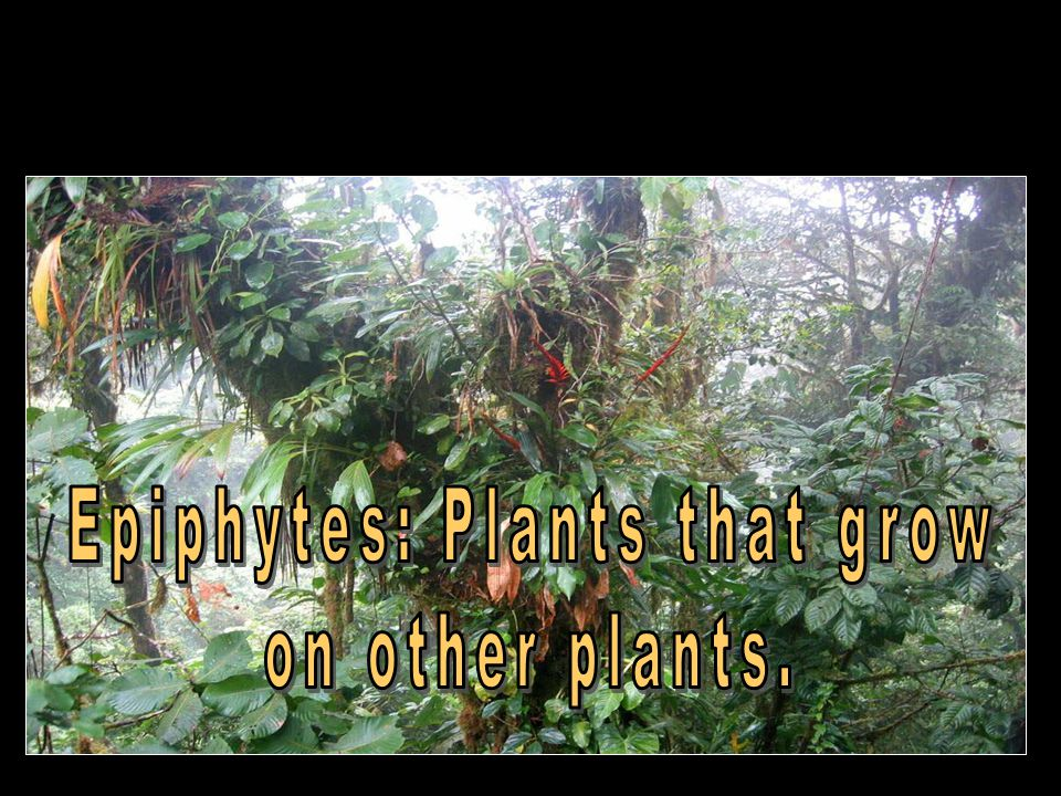 Epiphytes: Plants that grow