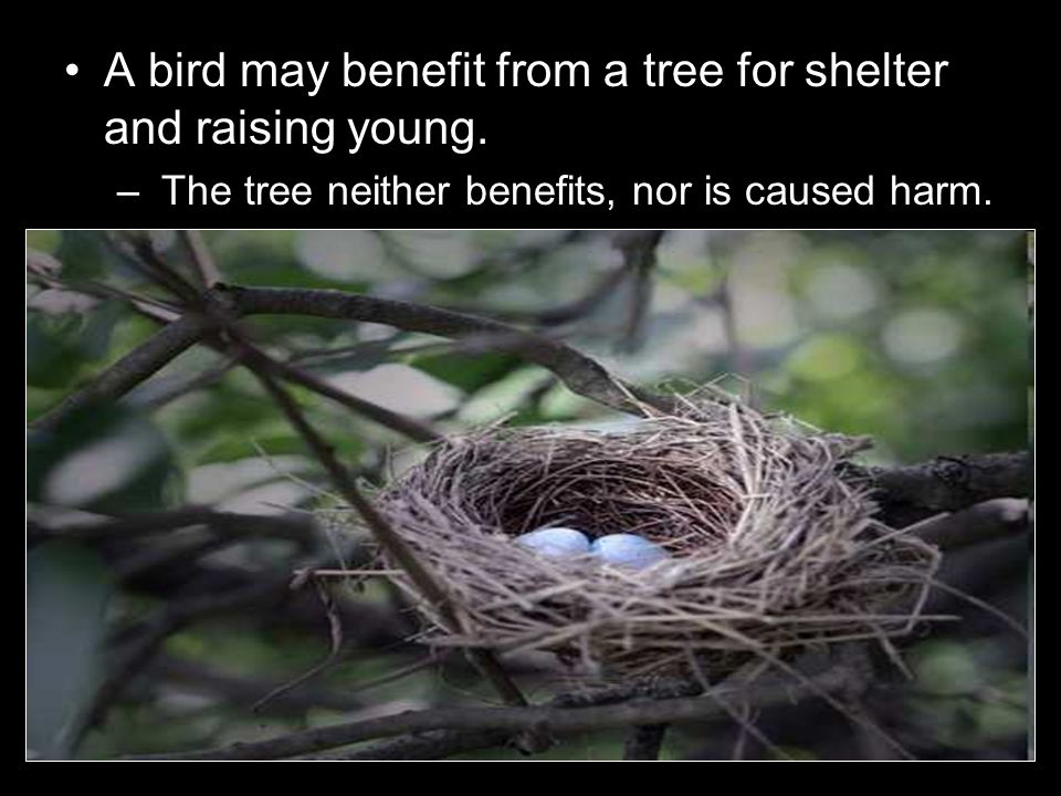 A bird may benefit from a tree for shelter and raising young.