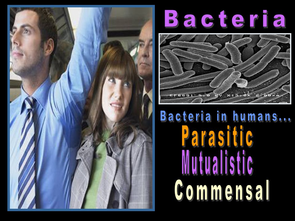 Bacteria Bacteria in humans... Parasitic Mutualistic Commensal