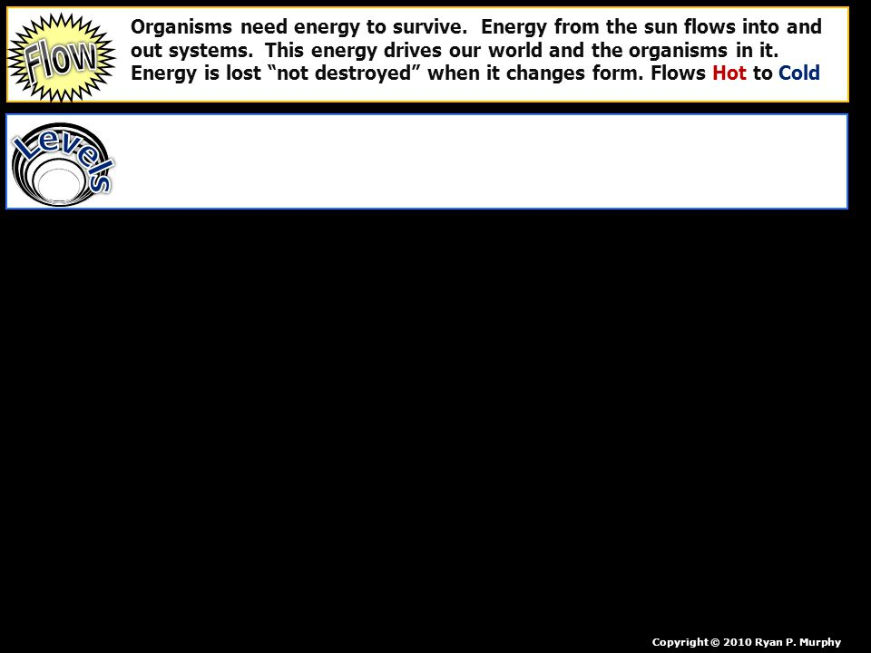 Organisms need energy to survive