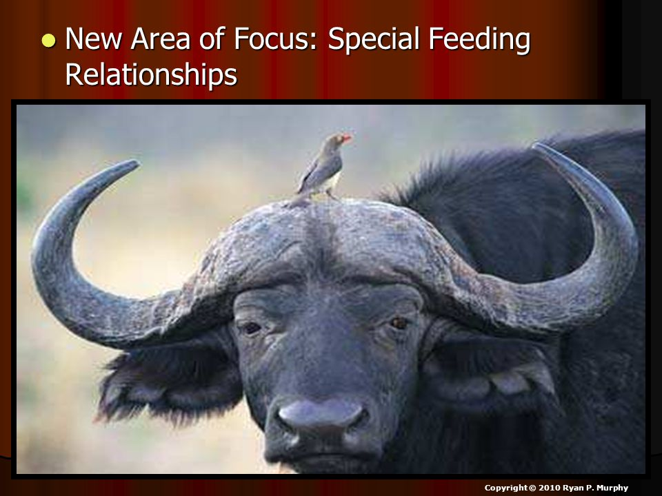 New Area of Focus: Special Feeding Relationships
