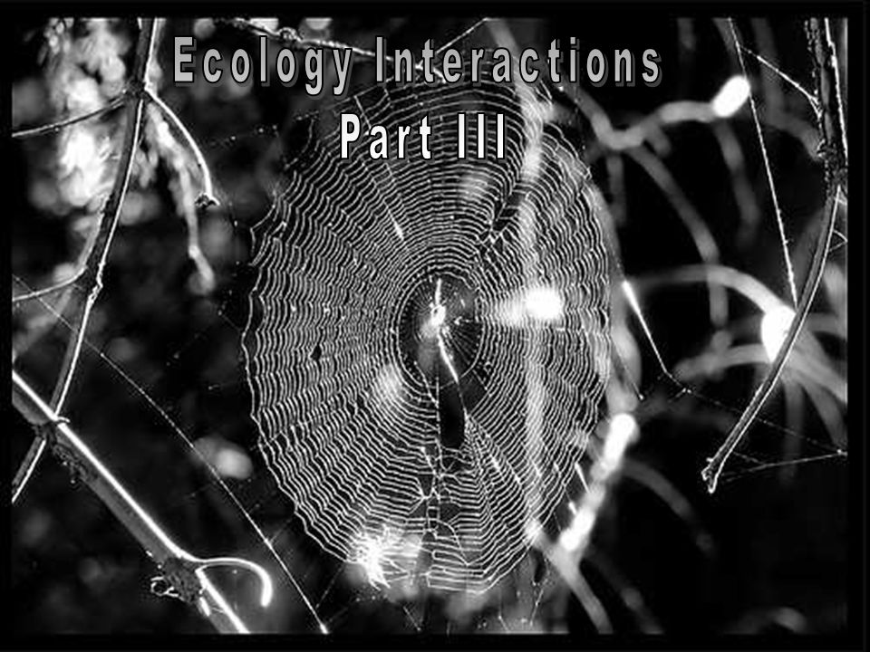 Ecology Interactions Part III