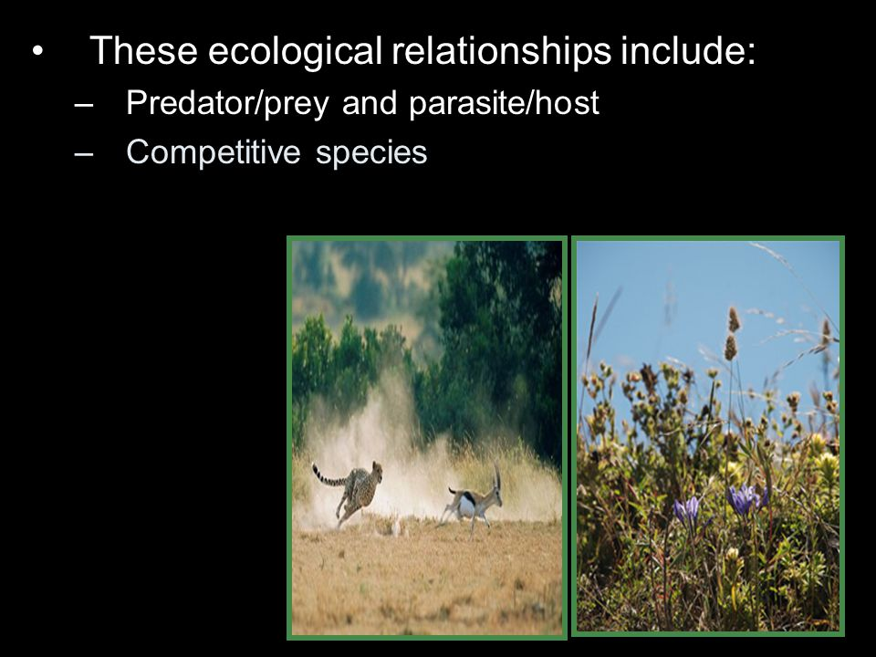 These ecological relationships include: