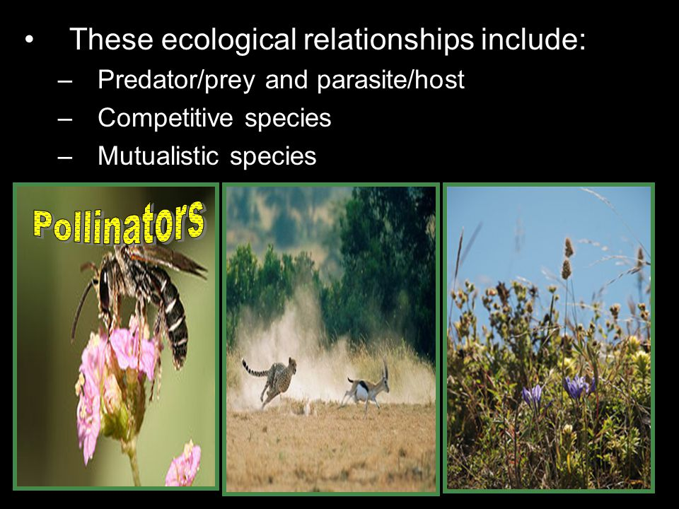 Pollinators These ecological relationships include: