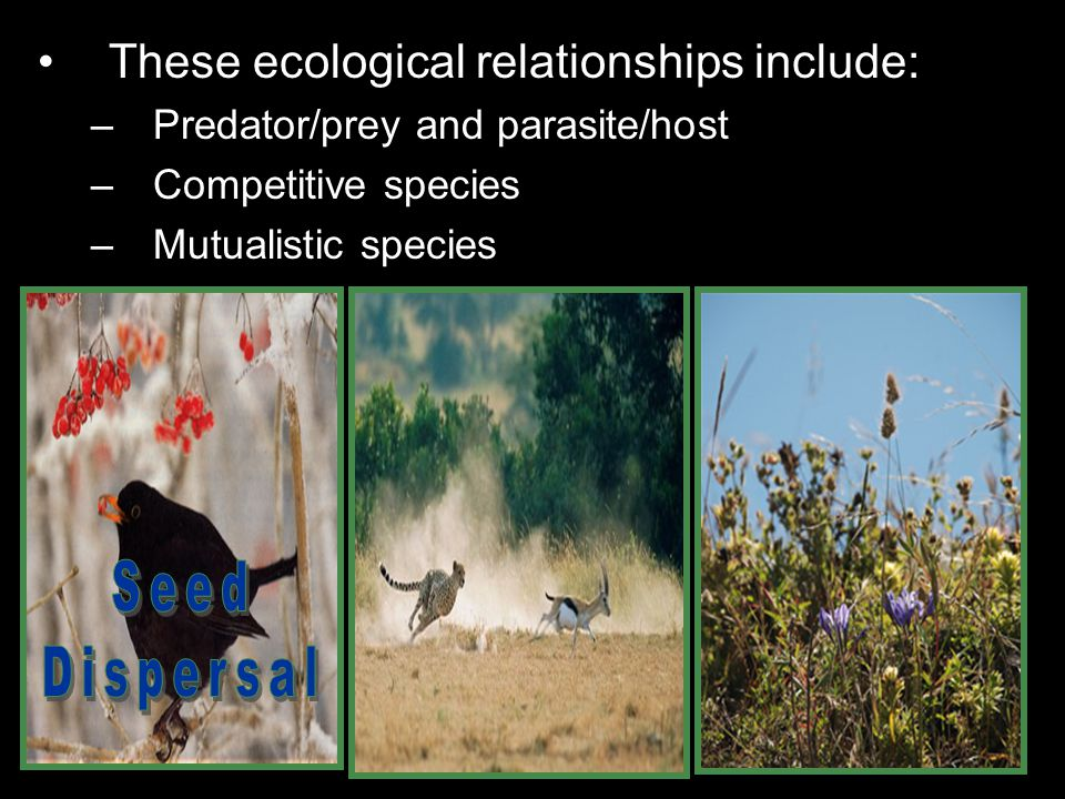 Seed Dispersal These ecological relationships include: