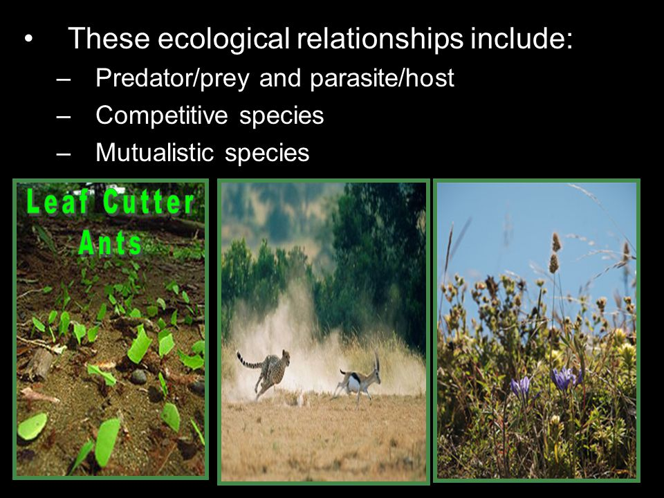 Leaf Cutter Ants These ecological relationships include: