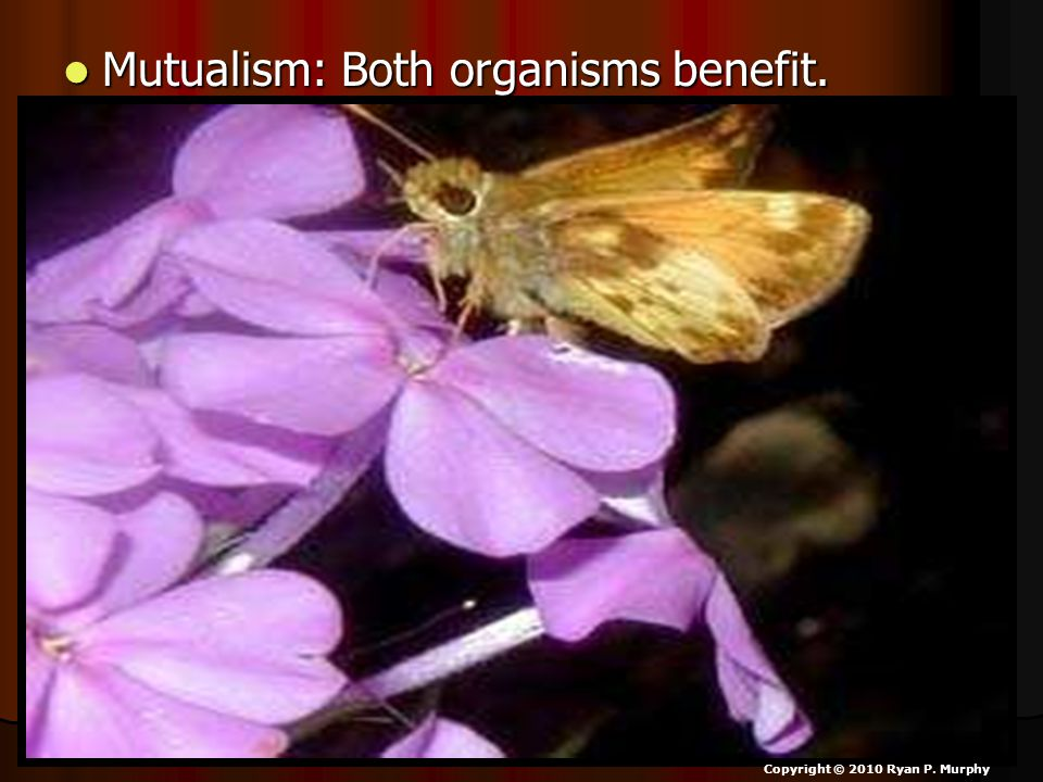 Mutualism: Both organisms benefit.
