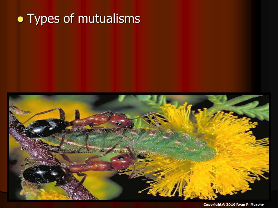 Types of mutualisms Copyright © 2010 Ryan P. Murphy
