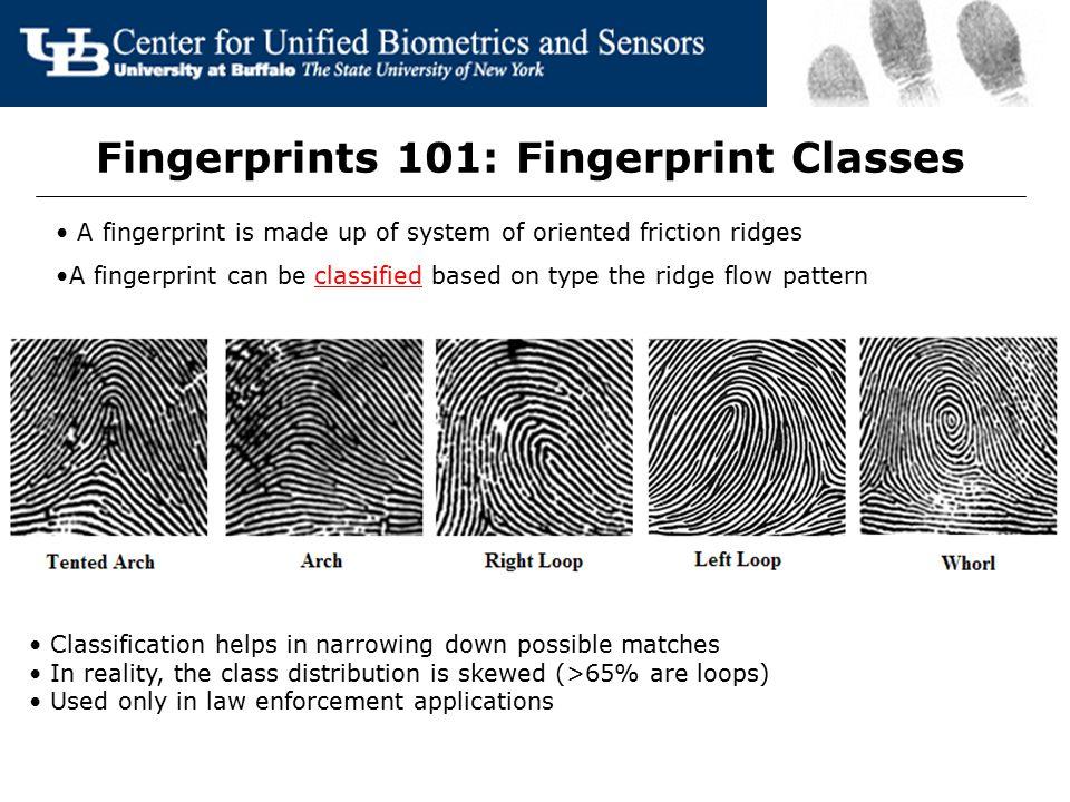 Fingerprints 101: Fingerprint Classes