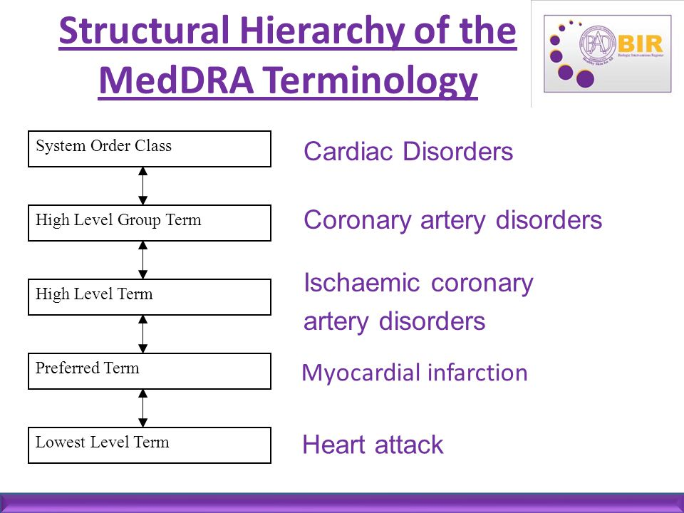 Structural Hierarchy of the MedDRA Terminology