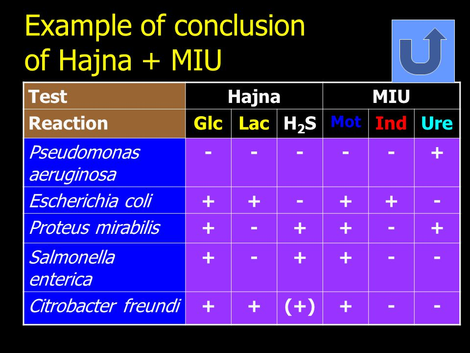 Example of conclusion of Hajna + MIU