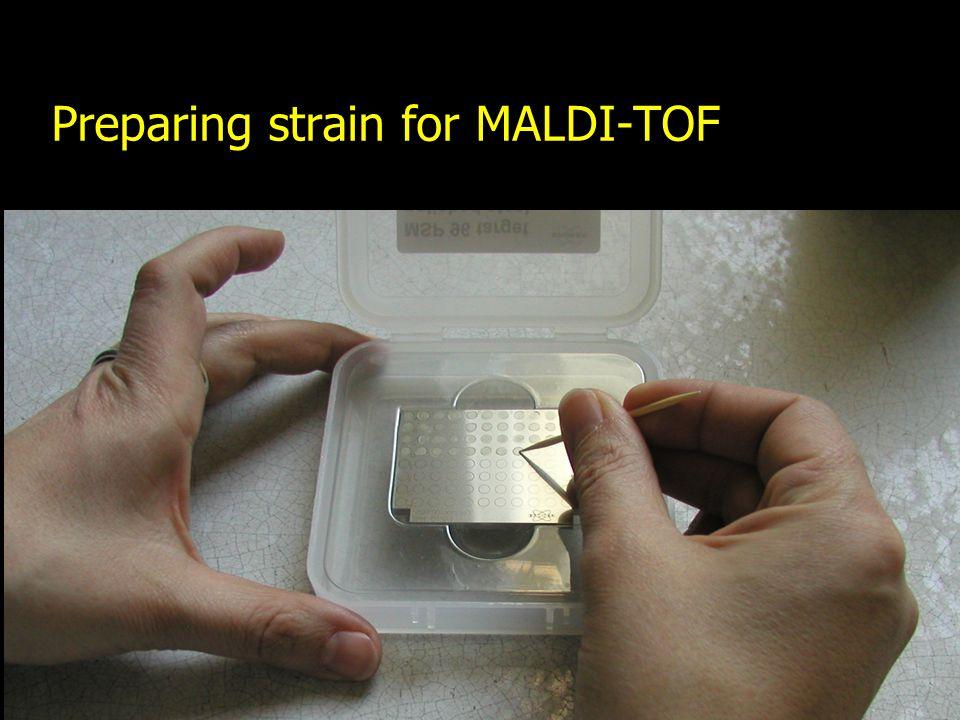Preparing strain for MALDI-TOF