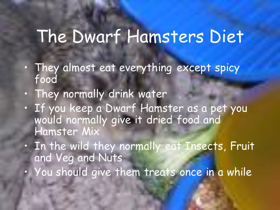 The Dwarf Hamsters Diet