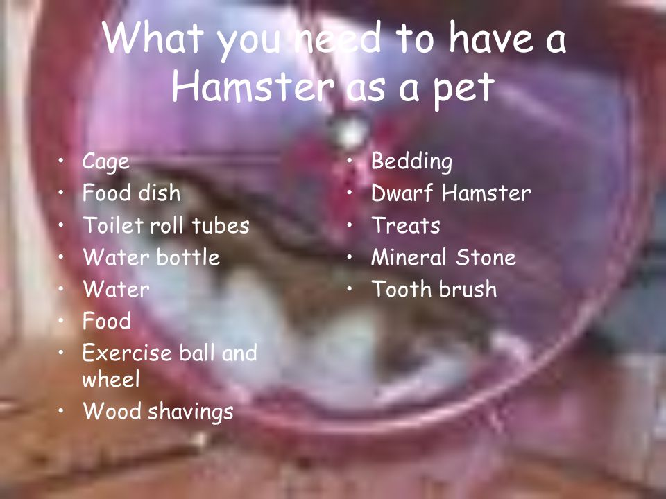 What you need to have a Hamster as a pet
