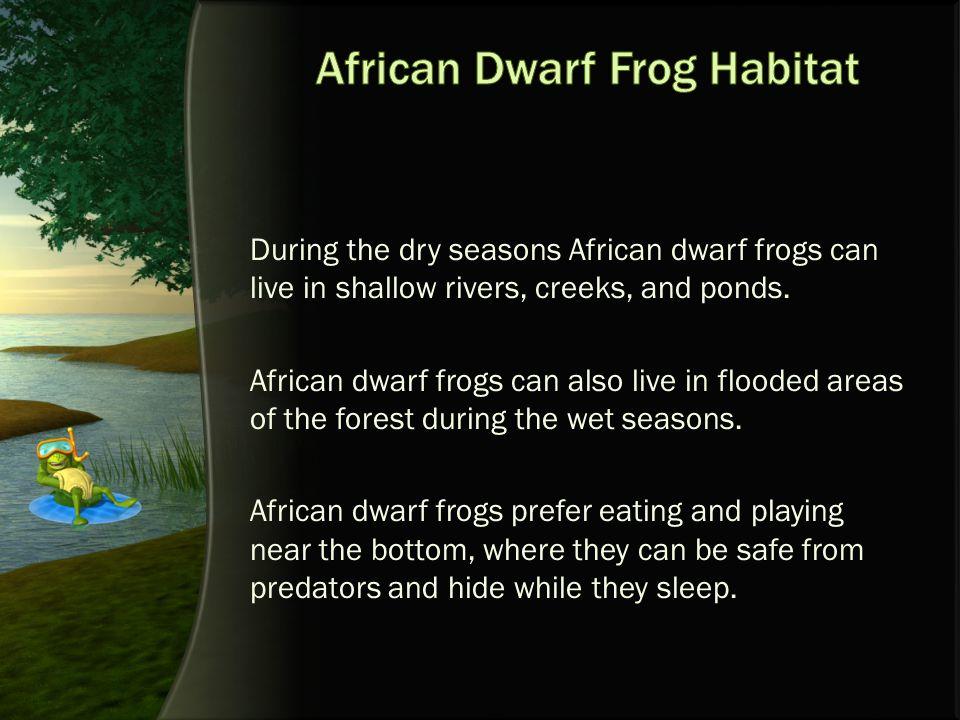 African Dwarf Frog Habitat