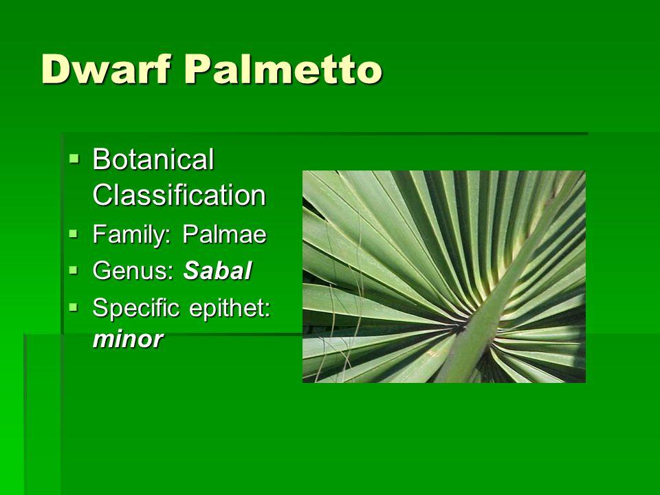 Dwarf Palmetto Botanical Classification Family: Palmae Genus: Sabal