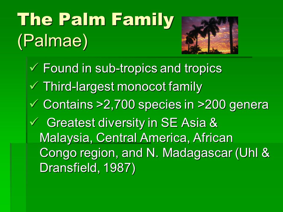 The Palm Family (Palmae)