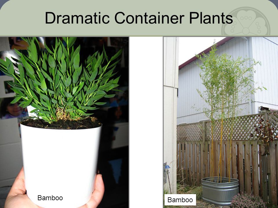 Dramatic Container Plants