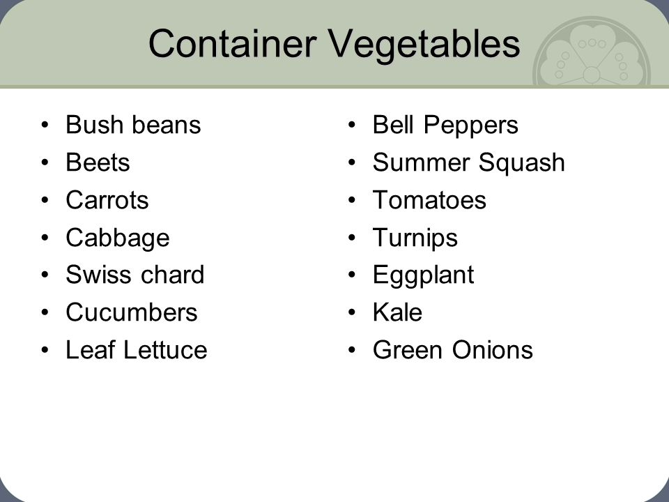 Container Vegetables Bush beans Beets Carrots Cabbage Swiss chard